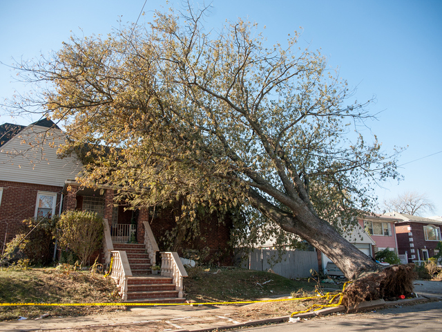 <p>This huge tree still remains toppled onto the roof of 95-19 159th Avenue on Tuesday November 06th, 2012.</p>