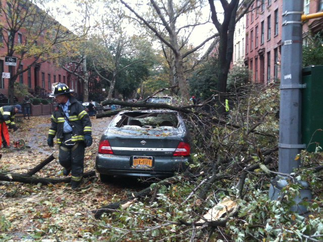 <p>Tree fallen at Dean and Bond streets.</p>