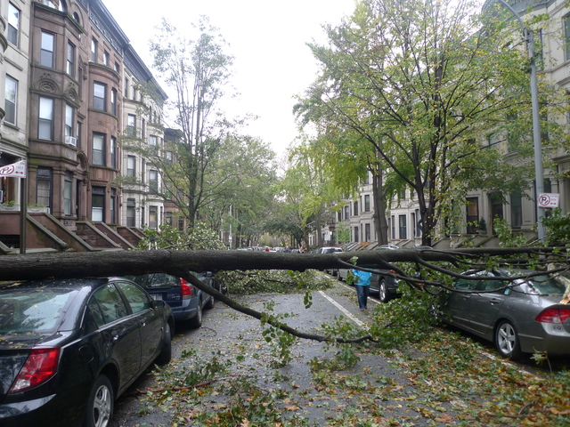 <p>A tree on Second Street between Prospect Park West and Eighth Avenue that fell about 9 p.m. Monday night as Hurricane Sandy raged through New York.</p>