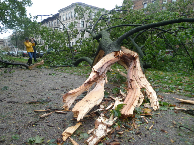 <p>Several felled trees along Prospect Park West blocked the bike lane and sidewalk in the wake of Hurricane Sandy in Park Slope.</p>