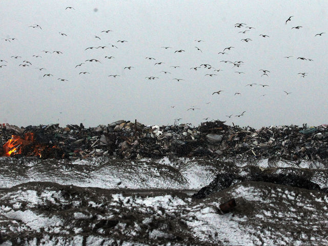 <p>Snow falls as gulls fly over a large debris pile as a Nor&rsquo;Easter arrives in the Rockaway neighborhood on November 7, 2012 in the Queens borough of New York City. The Rockaway Peninsula was especially hard hit by Superstorm Sandy and some are evacuating ahead of the coming storm.</p>