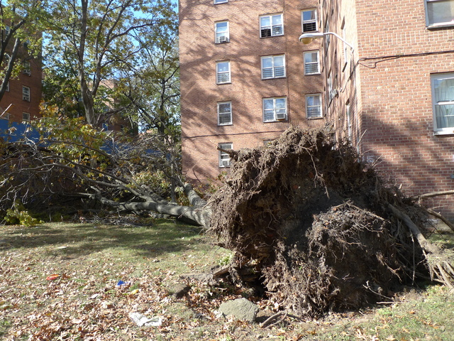 <p>The city is closing all parks, beaches and playgrounds starting Wednesday at noon because of concerns over falling trees and branches during a nor&#39;easter expected to hit the city Wednesday evening.</p>