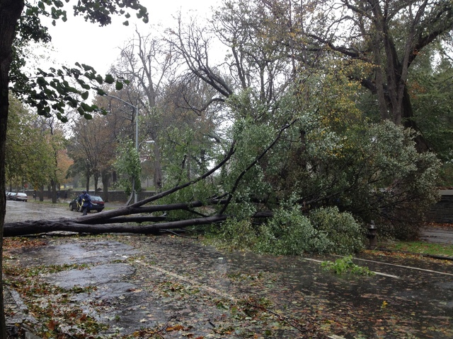<p>Tree down near Fort Greene Park, Oct. 30, 2012.</p>