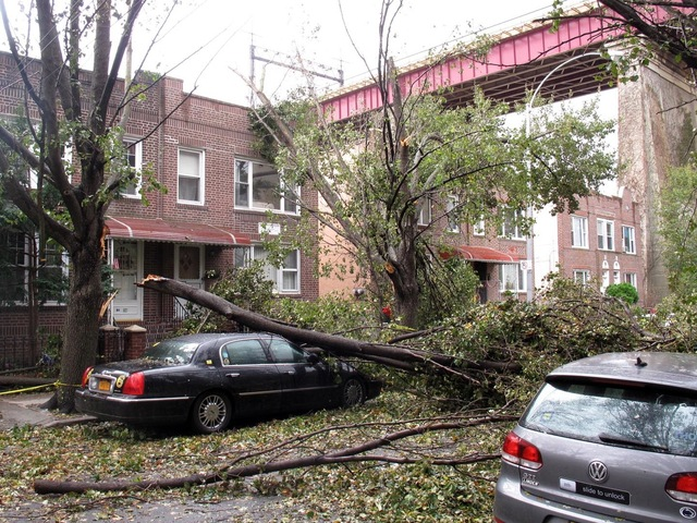 <p>A tree landed on a car in Astoria.</p> <div> 	&nbsp;</div>