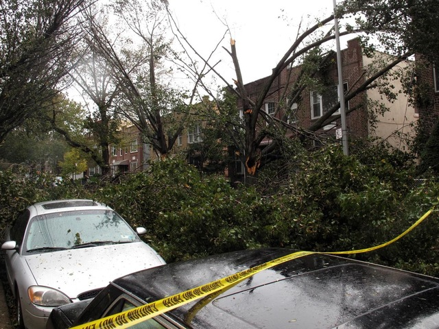 <p>Fallen trees in Astoria. &nbsp; &nbsp;</p>