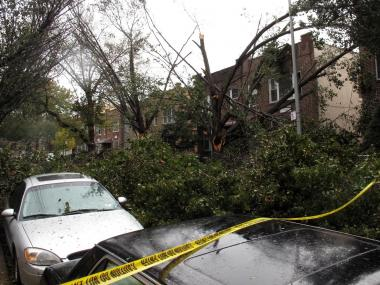 After thousands of trees fell during Hurricane Sandy, New Yorkers are afraid even more may fall during upcoming Nor'easter.