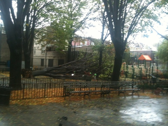 <p>Tree down at Andrews Grove Playground on 49th Avenue</p>