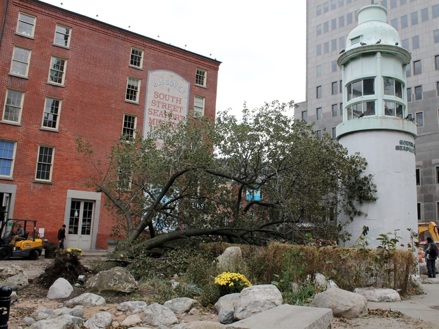 <p>A downed tree in the South Street Seaport, which suffered extensive flood damage during Hurricane Sandy on Monday.</p>