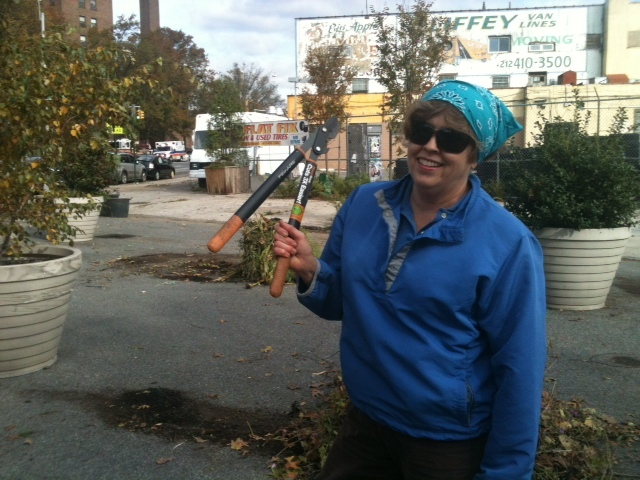 <p>Local schoolteacher KC Byrnes volunteered at Swindler&#39;s Cove, helping prune bushes damaged by Hurricane Sandy on Oct. 29, 2012.</p>