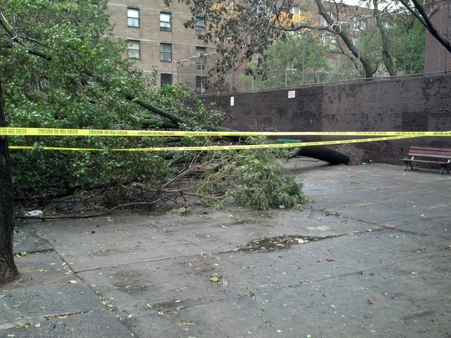 <p>A tree fell down on East 13th Street between Avenue B and Avenue C during Hurricane Sandy.</p>