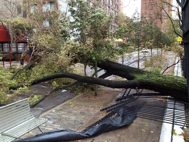 <p>A tree fell along South Street during Hurricane Sandy.</p>