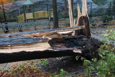 Up to 1,073 trees damaged by Hurricane Sandy in Staten Island parks could be removed this spring, according to the Parks Department.