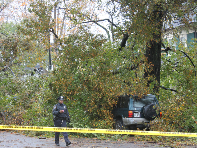 <p>Two people and a dog were found dead beneath a tree on a Flatbush street Tuesday morning, Oct. 30, 2012, the FDNY and residents said. The incident occurred as Hurricane Sandy battered New York City Monday night and Tuesday morning.</p>