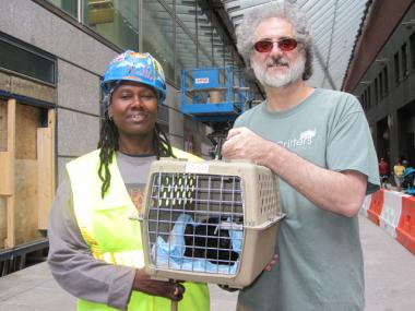 Rich Brotman of City Critters teamed up with construction worker Silkey Willaims to rescue a litter of kittens at the new Goldman Sachs building.