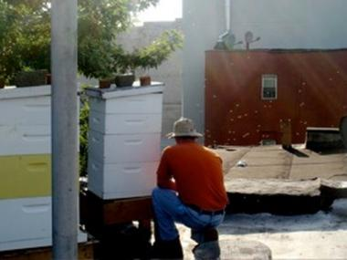 Fourth-generation beekeeper Andrew Cote can now openly tend to his beehives on a Lower East Side rooftop. Cote celebrated the City Council's decision Tuesday lifting a ban on keeping honeybees.