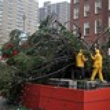 Christmas tree blown down by wind at south street seaport for 70 park terrace east new york ny