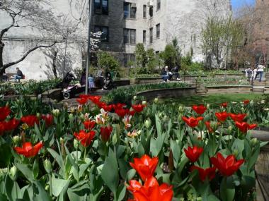 Visit the West Side Community Garden's annual Tulip Festival to see thousands of tulips planted by volunteers last fall.