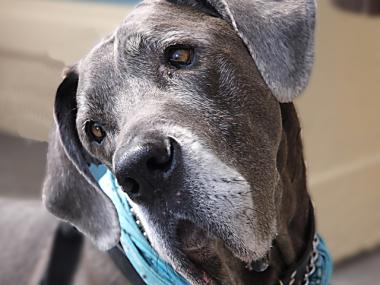 Tyras the Great Dane was beloved in the Seaport.