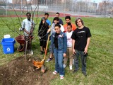 Hard Work Bears Fruit as Bronx Students Plant City's Biggest Orchard