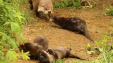 Baby Otters Warms Hearts at Prospect Park Zoo