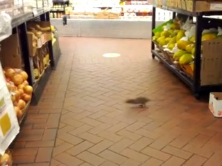 Rats have been spotted in Fairway Market on the Upper West Side.