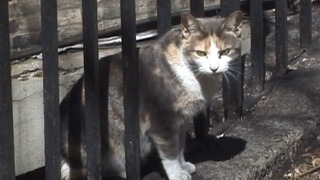 <p>Cats in a colony overseen by Neighborhood Cats.&nbsp;</p>