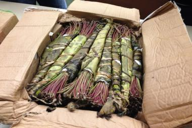 Authorities said they seized $20,000 worth of Khat.
