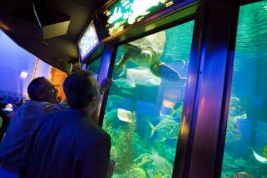 Guests stare down an aquatic animal at the Shedd.