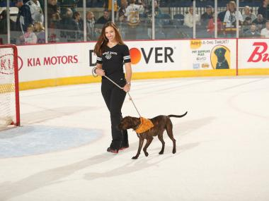 Chicago Wolves fans have adopted more than 1,000 dogs since the team started its Adopt-A-Dog Nights 12 seasons ago.