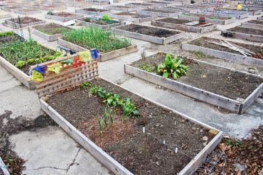The Peterson Garden Project has 150 planters at its Edgewater location for neighbors to grow their own veggies.