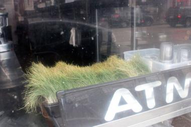 A dried out container of wheat grass in the window of a darkened BuckWick Organix Convenience store Monday served as a reminder that the store would not be opening again, or offering wheat grass shots in its juices.   BuckWick Organix opened in June 2011 at 1562 N. Milwaukee Ave., just south of the Milwaukee-Damen-North avenues intersection.
