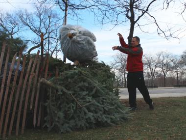 A man recycles his Christmas tree.