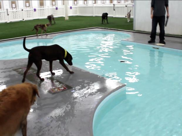 "Paradise 4 Paws is ""Chicago's Premier Resort for Cats and Dogs."""