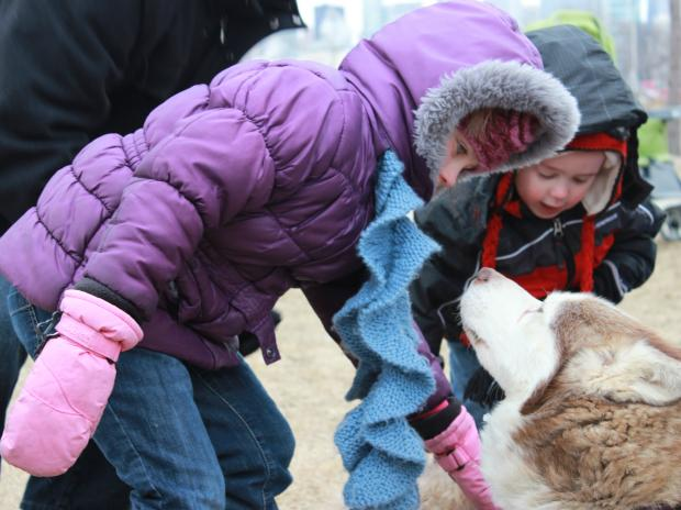 "The Chicago Park District held its 8th Annual ""Polar Adventure Days"" event at Northerly Island Feb. 16, 2013."