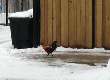 Residents have spotted the bird near SmallBar in Avondale.