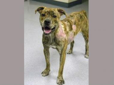 Kyle Voissem poured boiling water on his dog, a mountain cur named Byron, after it peed on his floor, reports show.