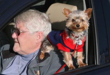 A bill would make it a violation to have an animal in your lap while driving.