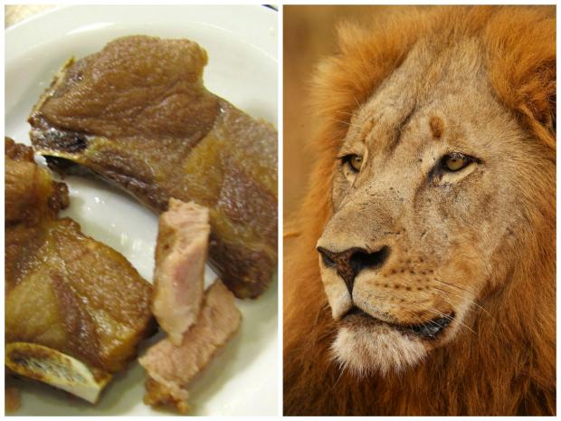 The Lion Meat Act would ban the slaughter for consumption of lions in Illinois.