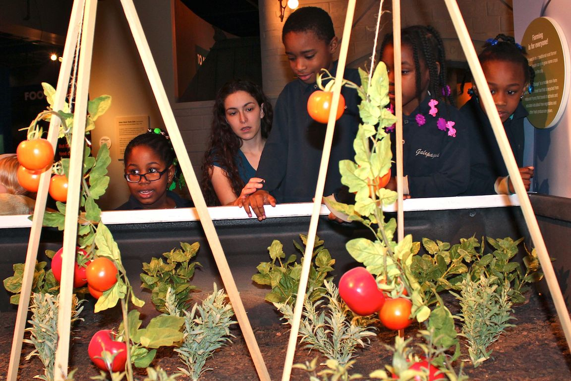 """Food: The Nature of Eating"" opened Saturday at the Peggy Notebaert Nature Museum."