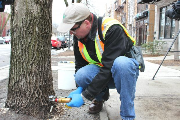 The city announced that $2.6 million would be spent treating infected ash trees.