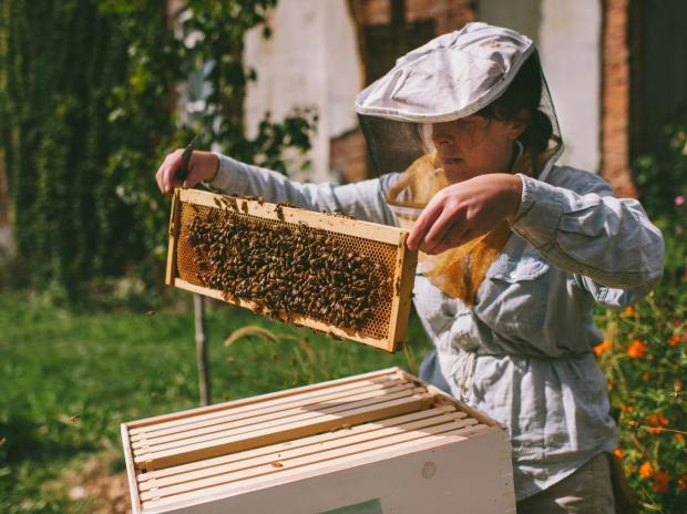 Jana Kinsman has plans to expand Bike a Bee, her urban farming project.