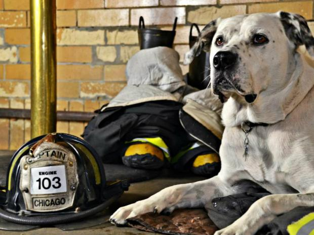 You could say that Freckles the Firehouse Dog is a local celebrity.