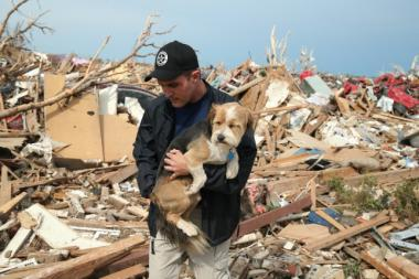 A dog amid the tornado destruction in Moore, Okla. A team from PAWS Chicago is headed to Oklahoma this weekend to rescue 75 animals and put them up for adoption.