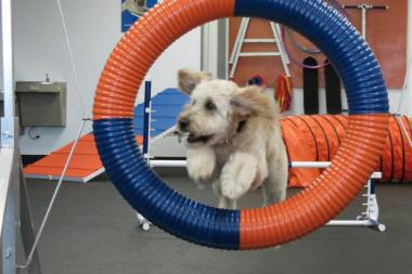 Zoom Room offers an indoor playground, agility classes and obedience classes for dogs. The first Chicago location is schedule to open this fall at 3055 N. Ashland Ave.