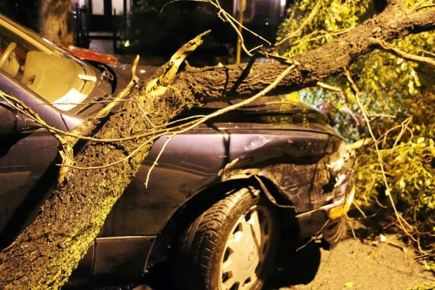 High winds Friday night sent tree limbs flying in various parts of the area, including in Lincoln Park where at least one car was crunched by a falling branch.