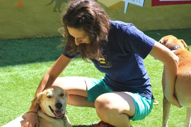 Alive Rescue shelters hard-to-adopt dogs and cats.