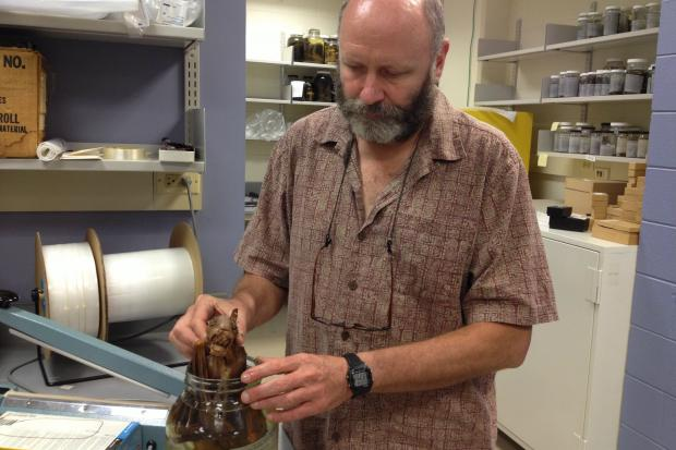 Bill Stanley is the director of collections and mammals collections manager at the Field Museum.