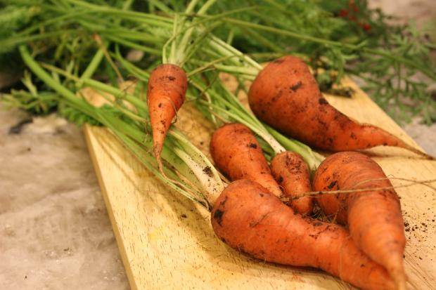 DNAinfo.com's resident urban gardener loves her carrots, even if they taste like soap.