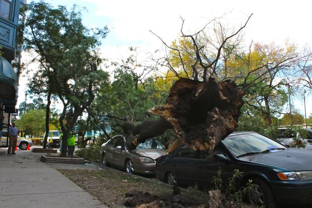 A falling tree damaging multiple cars along Sheffield at Wrightwood Avenue early Monday morning.