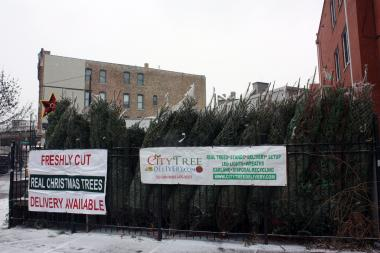 City Tree Delivery sells about 1,000 trees per year from Big Star's outdoor lot at 1531 N. Damen Ave, according to founder Chris Hohenstein.